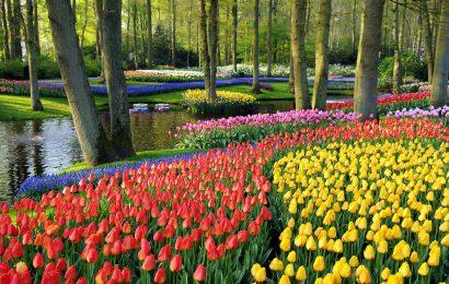 Didžiausias pasaulyje gėlių parkas