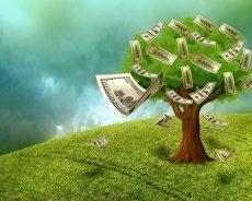 Miškas ir žemės sklypas taip yra nekilnojamas turtas
