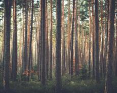 Patarimai kaip parduoti mišką už geriausią kainą