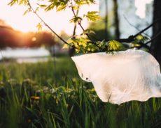 Eko pakuotė: praktiškumą derinkite su gamtos saugojimu